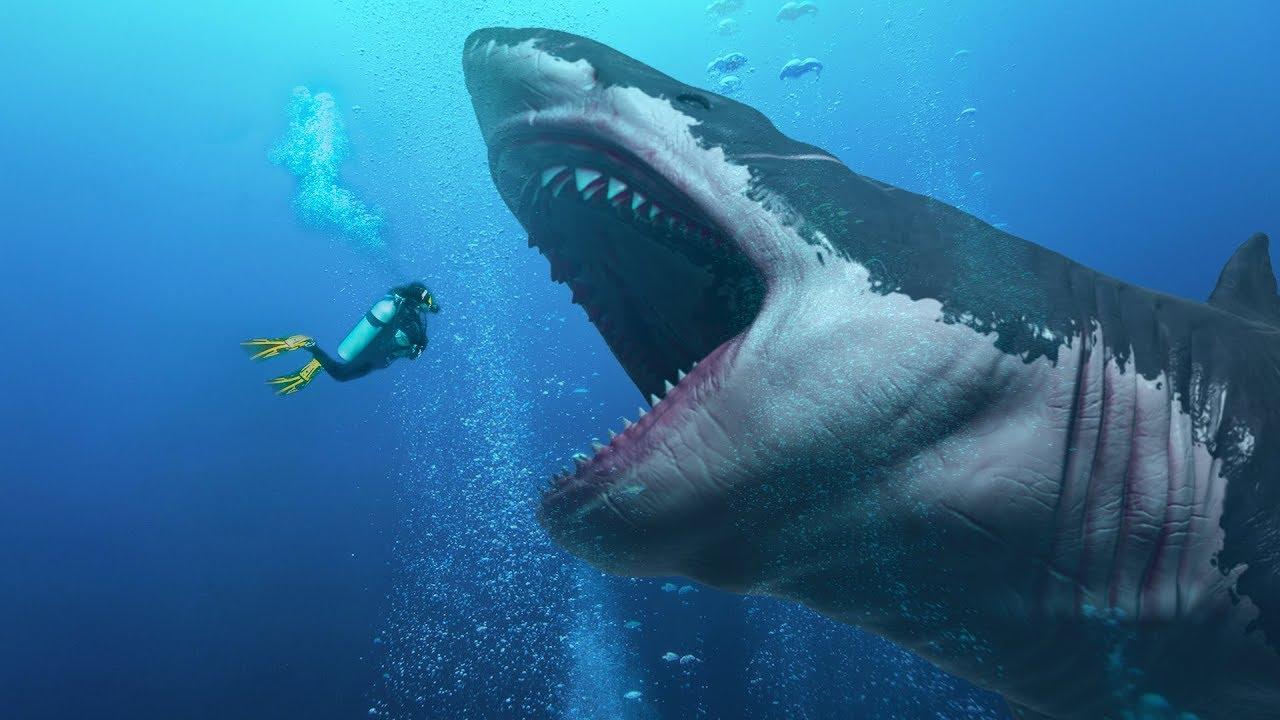 Школьница нашла зуб самой большой акулы в истории