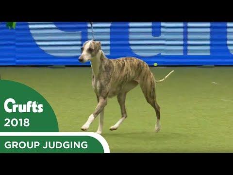 Hound Group Judging   Crufts 2018