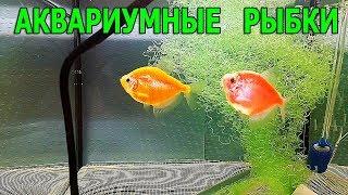 Рыбок в нерестовик