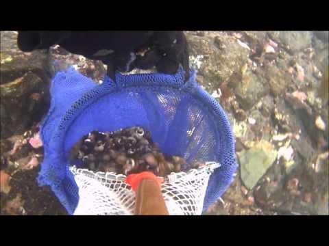 St pierre et Miquelon apnée pêche oursin et vignette