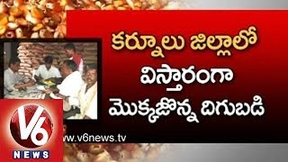 Government Subsidy - Markfed Counters - Maize Cultivation Major Crop in Kurnool