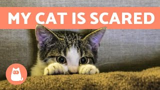 My Cat is SCARED of Everything 🙀 Causes & Solutions
