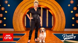 Bbc 1 tv - pooch perfect
