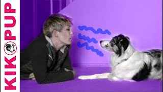 How To Communicate With A Dog In His Own Language- Dog Training Dog Communication