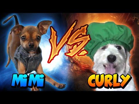 DUELO DE MASCOTAS YOUTUBERS | CURLY VS MIMI | Mascota Fernanfloo vs Mascota German 2017