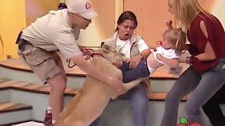 WTF!? Лев кусает ребенка