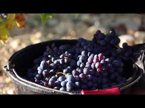 moulla フランスの小さな村々のワイン vol.2