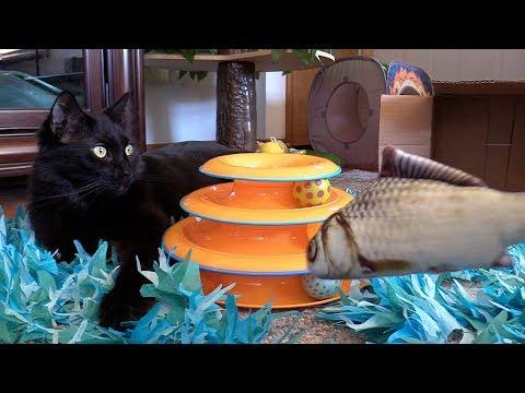 Cat Fishing 🐟 Happy 6th Birthday Cole!