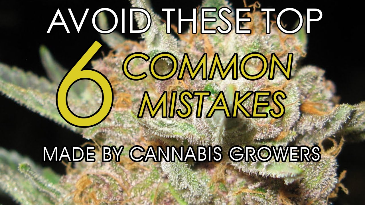 Avoid These 6 Common Mistakes Made by Cannabis Growers