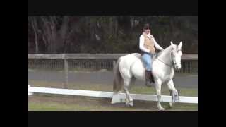 How to Ride the Trot & Canter: Part II