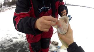 Lake of the Woods Outdoorsman Early Ice Fishing 2013