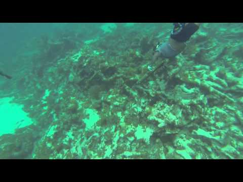 Spear fishing with riffe at Prickerly Pear Cays Anguilla