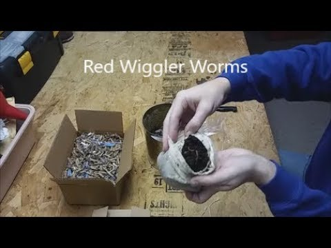 Review Red Wiggler African Nightcrawler European Worms Colony Starter Kit Vermiculture