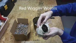 Review Red Wiggler African Nightcrawler European Nightcrawler Worms Colony Starter Kit Vermiculture.