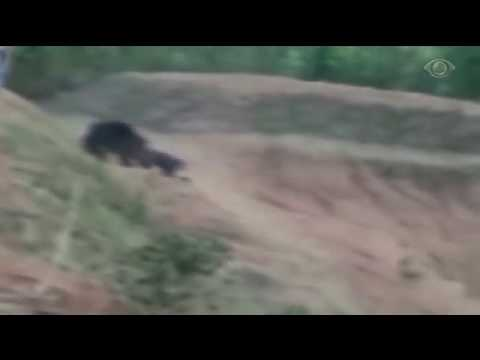 Homem é Morto Ao Tentar Tirar Selfie Com Urso Na índia