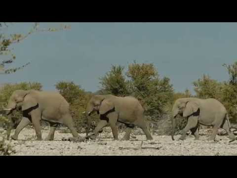 Etosha National Park (Namibia) 2016 - Our Wildlife Highlights in HD documentary