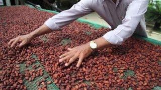 Les pionniers du chocolat de luxe au Vietnam