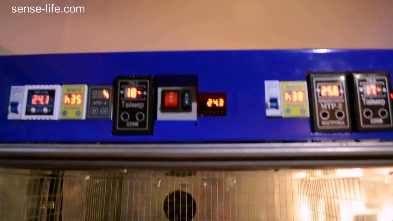 Инкубаторы бытовые автоматические своими руками фото 51