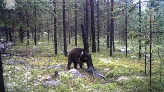 видео г. Оленегорск - Заповедная Россия