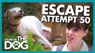 Escape Artist Dog Won't Stop Digging Tunnels to Freedom! | It's Me or the Dog