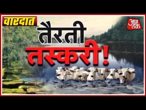 Vardaat: Cows Smuggled To Bangladesh On Floating Banana Stems From Assam