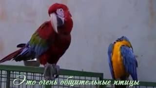 Про животных смотреть видео часть 4 птицы(Принимаю заказы на изготовление видео роликов, слайд шоу, музыкальных открыток. Мой скайп: nad-kostina Моя почта:..., 2016-10-21T10:42:03.000Z)