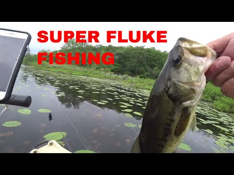 Large Mouth Bass Fishing Long Pond New York With The Zoom Super Fluke