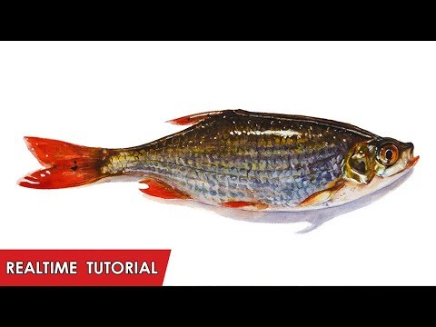 Real Time Tutorial – FISH You Only Live One – Realistic Watercolor Painting