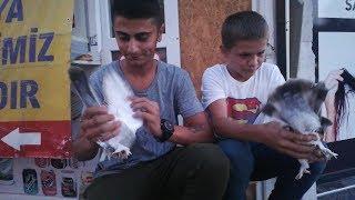 Şanslı Talihliler Kuşlarını Almaya Geldiler Pendikten Fatih ve Kadir Kuşçu Ortaklar