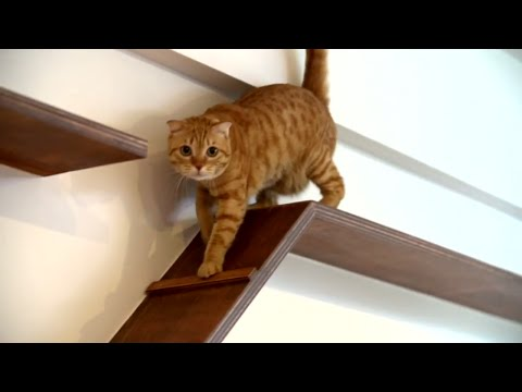 Cat House | I Love This | HGTV Asia