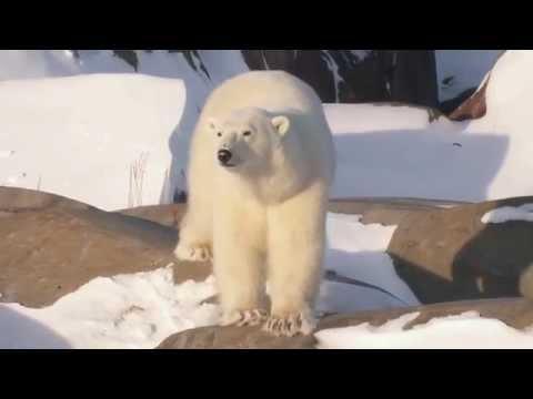 Coca-Cola Arctic Home: Canada