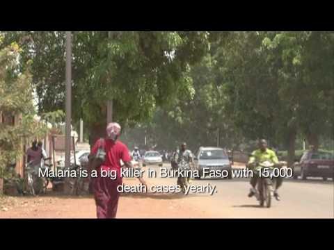 Malaria Mosquitoes