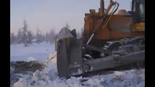 Рабочие в Якутии спасают росомаху.
