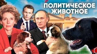 Политическое животное. Каких собак заводят первые лица государства