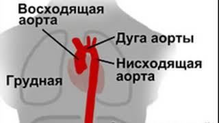 Скорая помощь Кровеносная система