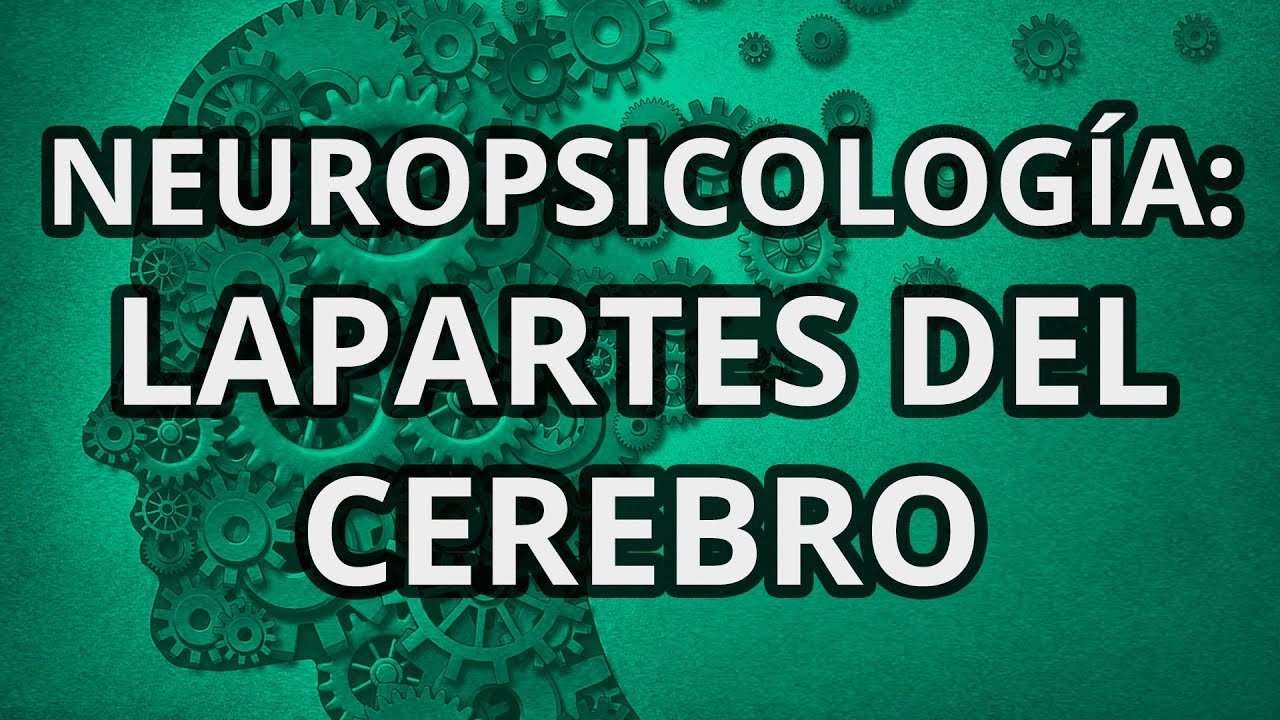 La Neuropsicología - Partes del cerebro - YouTube
