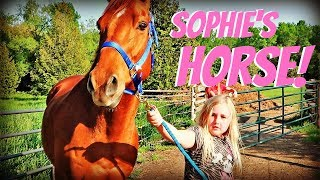 introducing sophies new horse