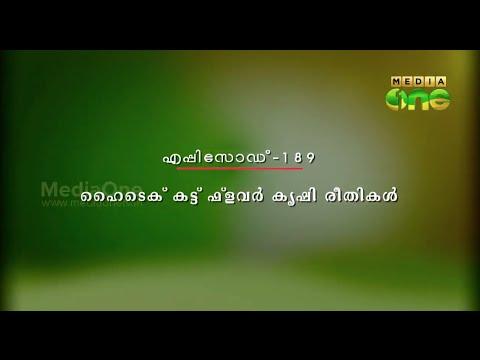 Njatuvela -   ഹൈടെക് കട്ട് ഫ്ളവർ കൃഷി രീതികൾ (Episode189)