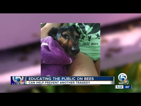 Educating the public about bees after dog attacked