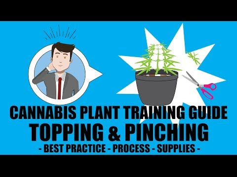 Topping & Pinching - Marijuana Training Techniques
