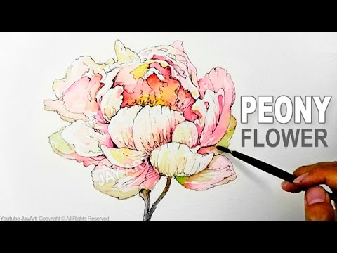 How To Draw Paint A Peony Flower With Ink And Watercolor Level 5 Youtube