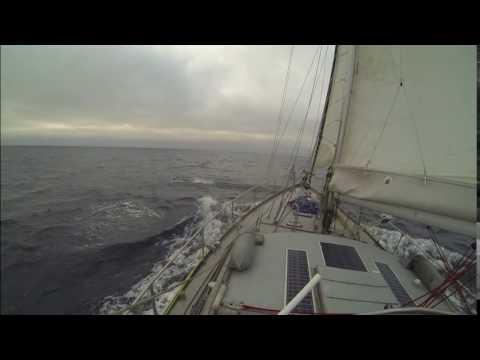 24 July Dolphins play around the boat, Barents Sea nr Novaya Zemlya Russia
