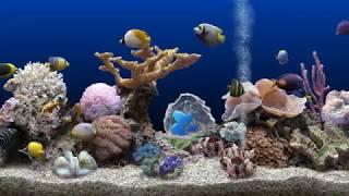 Aquarium Jazz - Great jazz with swimming fish screenshot 3