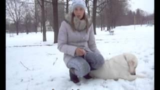 видео Собака не ест. Почему собака не ест и что делать?