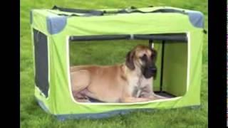 Kennel Training A Dog