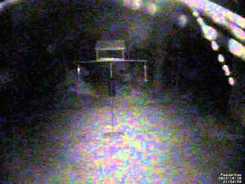 Feedercam Capture (2013-10-10)