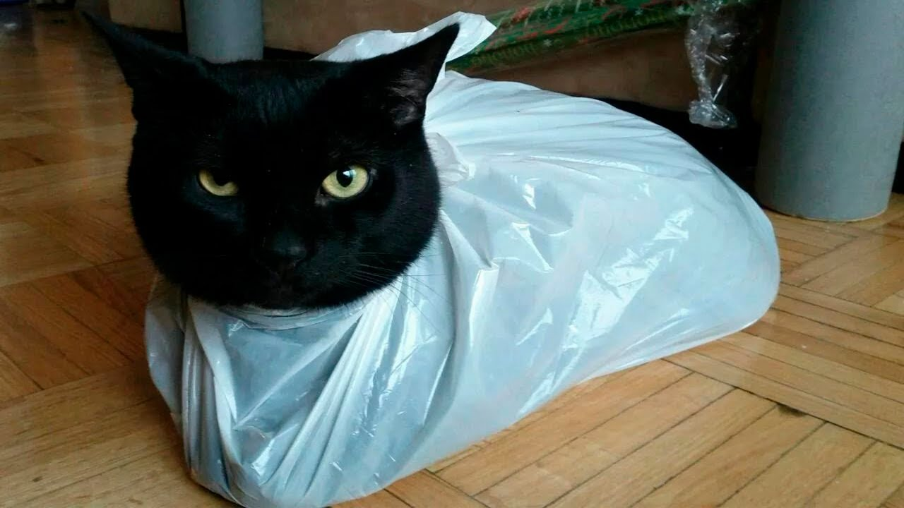 Cats vs Bags(Plastic bags, Paper bags) - Funny Cats Scared of Bags