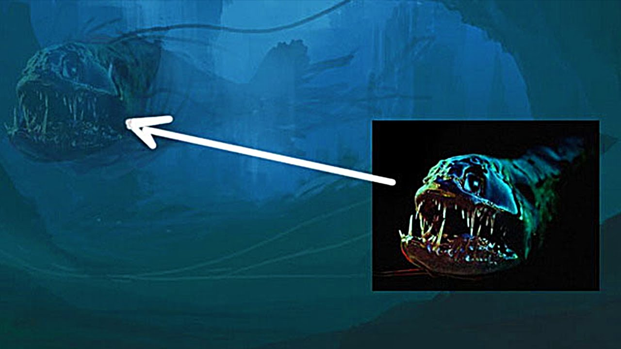 фото со дна марианская впадина