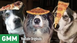 Dogs Balance Pizza On Their Heads | Teach Your Old Dog A New Trick