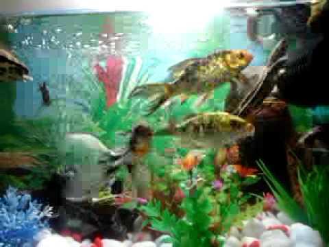 Best fish and turtle aquarium setup part 1 youtube for Koi fish tank setup